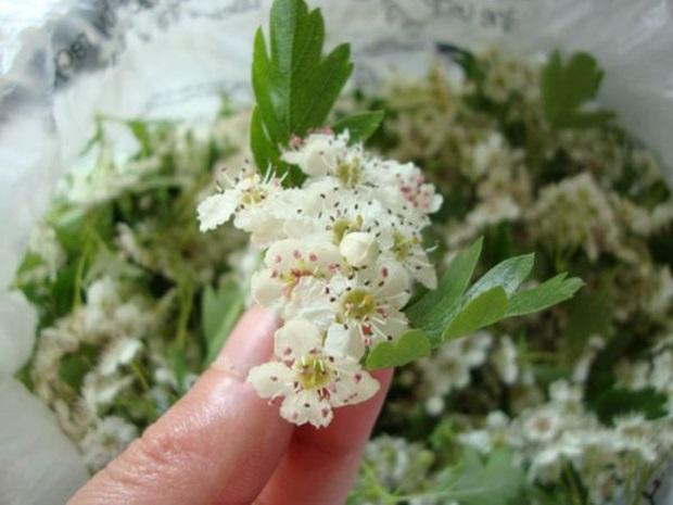 glog_cvijet