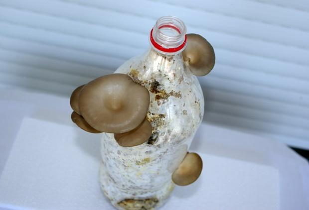 Gljive5dan
