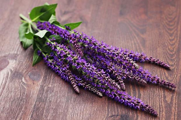 kadulja-cvijet