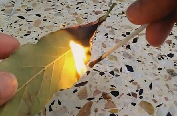 Image result for KADA KRENE PO ZLU: Zapalite list lovora u sobi i posmatrajte šta će se desiti nakon samo PAR MINUTA