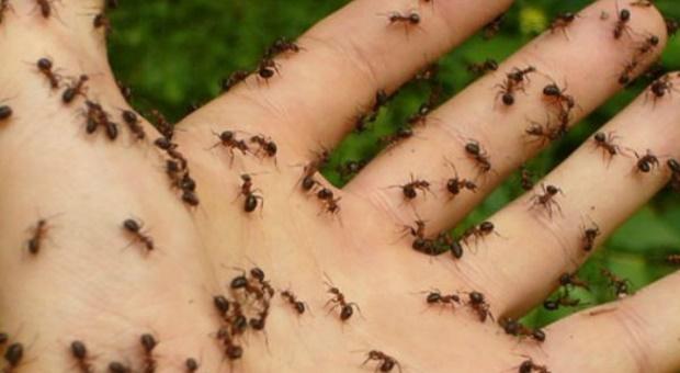 mravi (1)